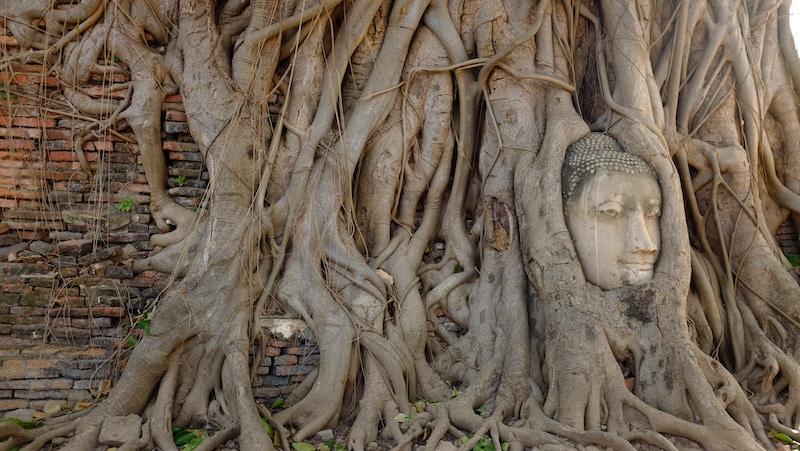 Генограмма — это схематическое изображение семейной истории, родословное древо. За этим изображением стоят судьбы.
